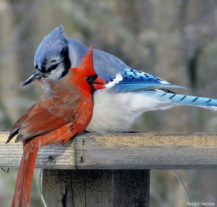 Color wars at the bird feeder